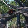 Miami Metro Zoo